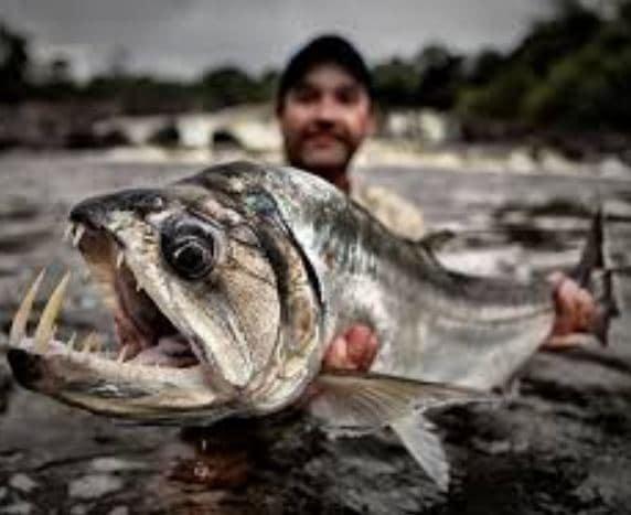 Zeb Hogan Fishing, Net Worth